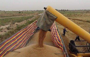 العراق يساعد الفلاحين في المناطق المحررة على بيع محاصيلهم