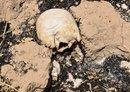 مقبرة جماعية في الموصل تضم رفات 100 ضحية من ضحايا داعش